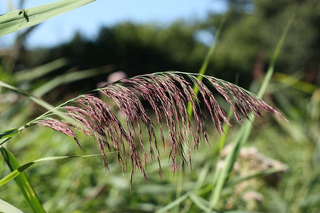 close up of reeds