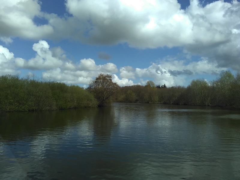 river bank lined with trees