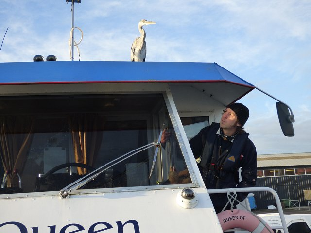 close up pf heron standing on top of queen of the broads passenger trip boat with man on deck peering up at it